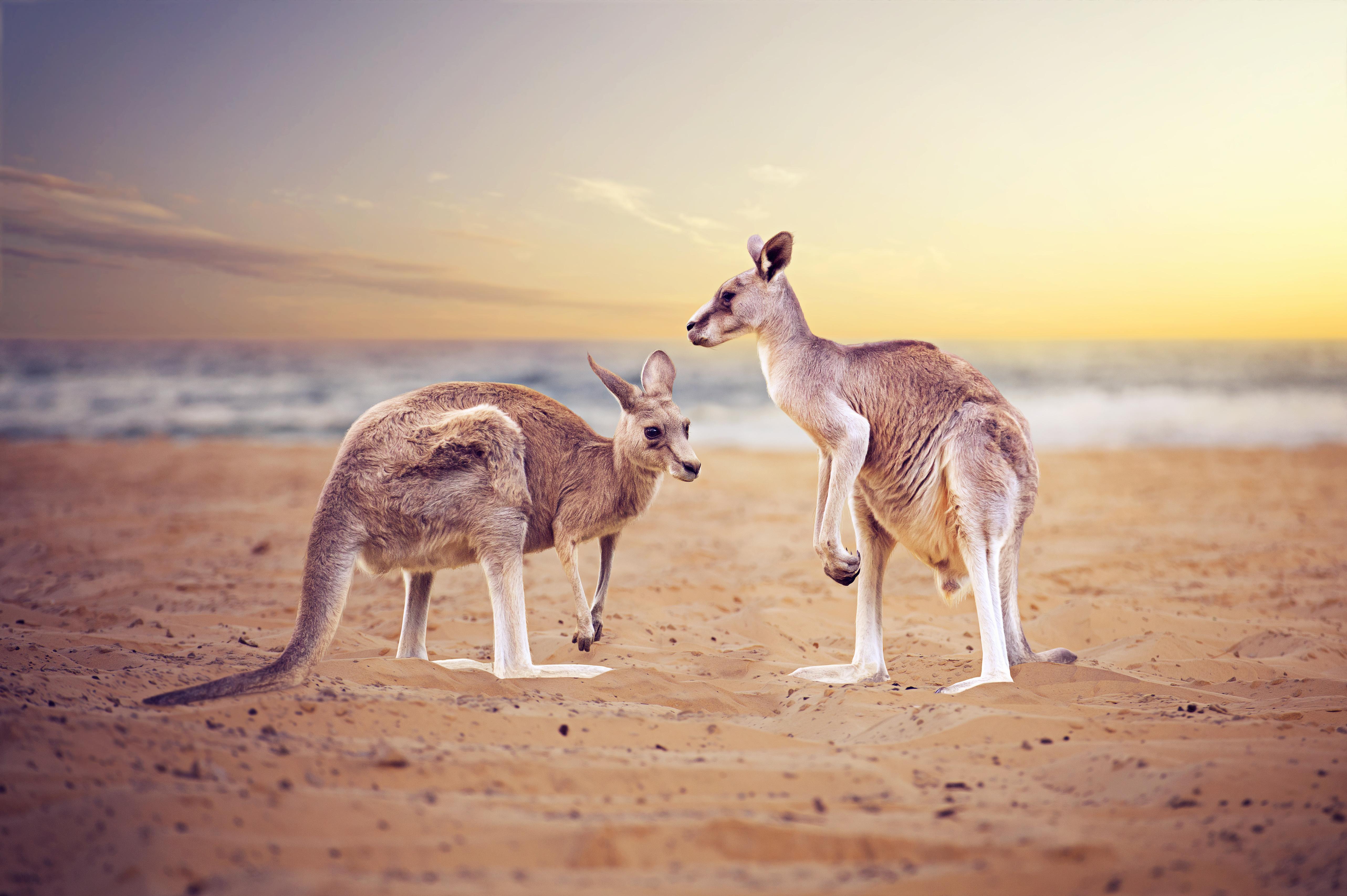 Rundreise Australien -Naturwunder & Erlebnis The Ghan mit ...