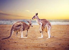 Reisebild: Rundreise Australien -Naturwunder & Erlebnis The Ghan mit Eigenanreise