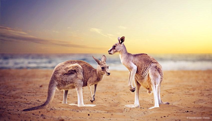 Rundreise Australien und Tasmanien :: Saison 2019 :: Flugreise (AU ...