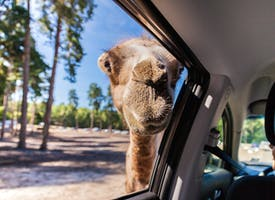 Reisebild: Gruppenreise in den Serengetipark