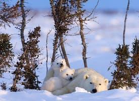 Reisebild: Studienreise Ost-Kanada - Eisbären hautnah erleben