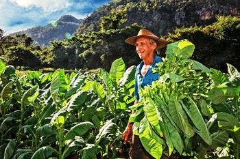 Tabakbauer im Vinales-Tal - ©Ingo Bartussek - Adobe Stock