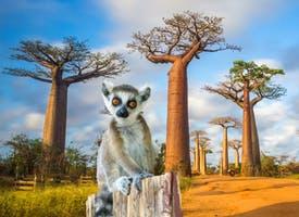 Reisebild: Privat-Rundreise Madagaskar, La Reunion und Mauritius