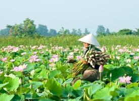 Reisebild: Rundreise-Variante nur Vietnam mit Eigenanreise