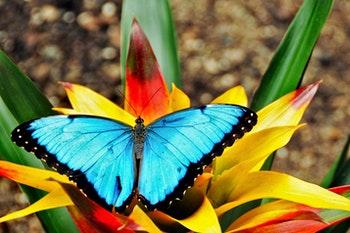 Schmetterling in Costa Rica - ©14ktgold - Fotolia