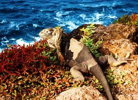Reisebild: Ecuador - Galapagos-Inseln