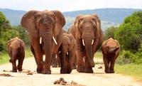 Elefantenfamilie in Südafrika - ©fishcat007 - Fotolia