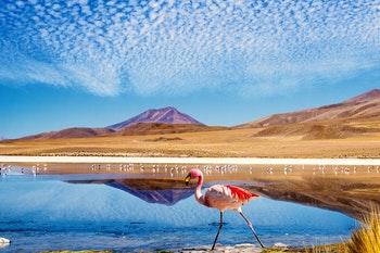 Flamingolagune, Bolivien - ©mezzotint_fotolia - Adobe Stock