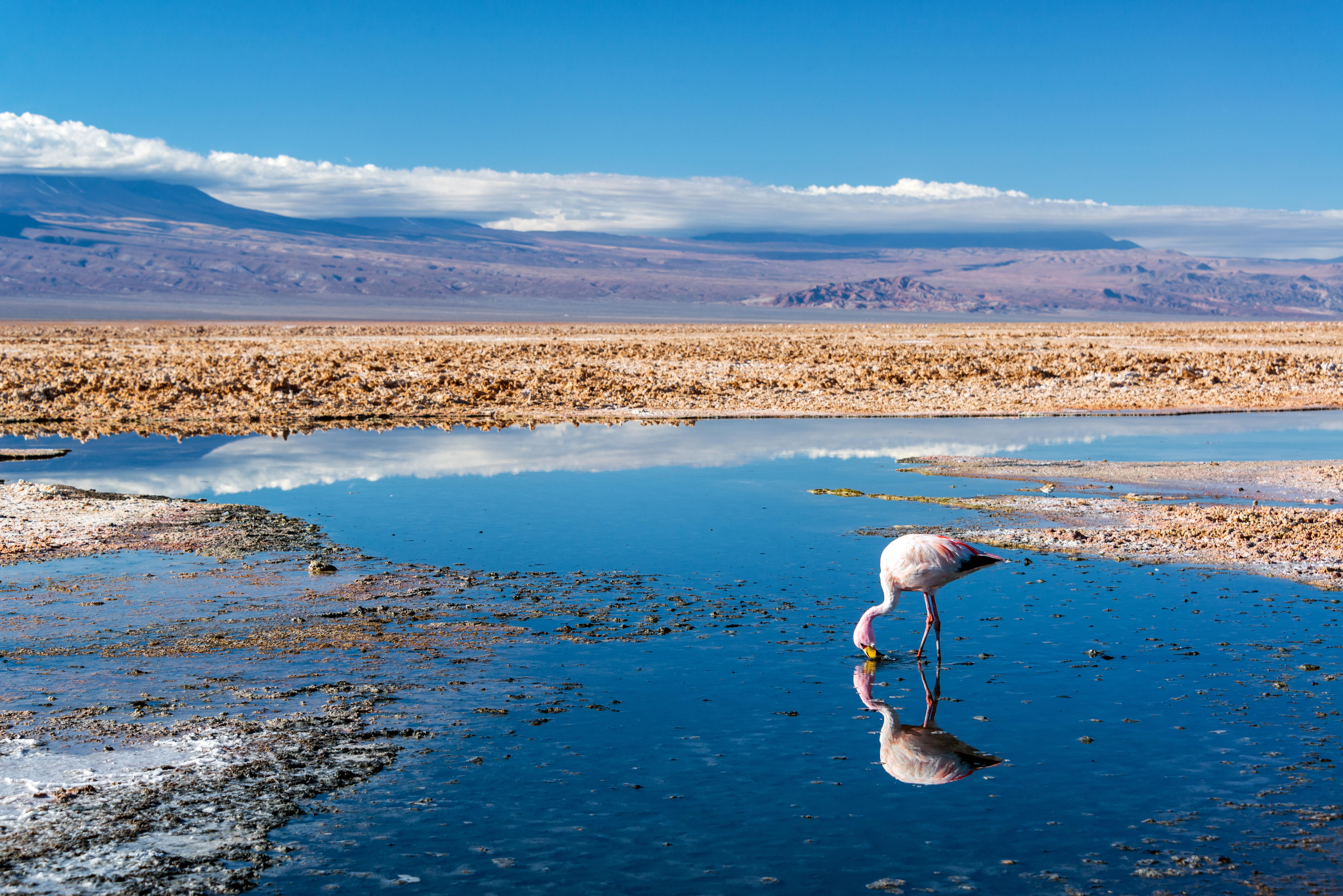 https://assets.eberhardt-travel.de/2018/Chile/60065_Flamingo_im_Salzsee_Chile_Original.jpg