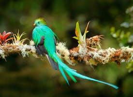Reisebild: Singlereise Costa Rica - Regenwald, Vulkane und Karibik
