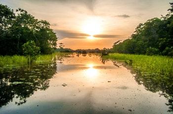 Sonnenuntergang im Amazonas-Regenwald - ©klublu - Adobe Stock