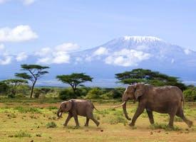 Reisebild: Rundreise Kenia - exklusive Safari im Tierparadies
