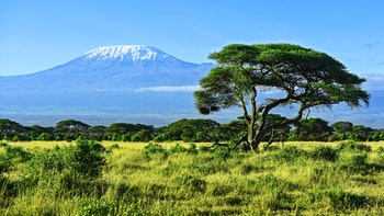 Blick auf den Kilimanjaro in Kenia - ©kyslynskyy - stock.adobe.com