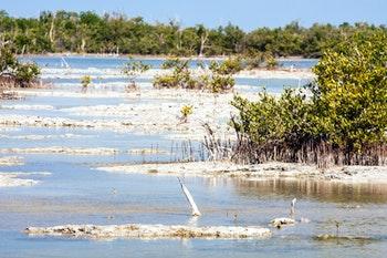 Zapata Halbinsel Sumpfgebiet - ©jiduha - stock.adobe.com
