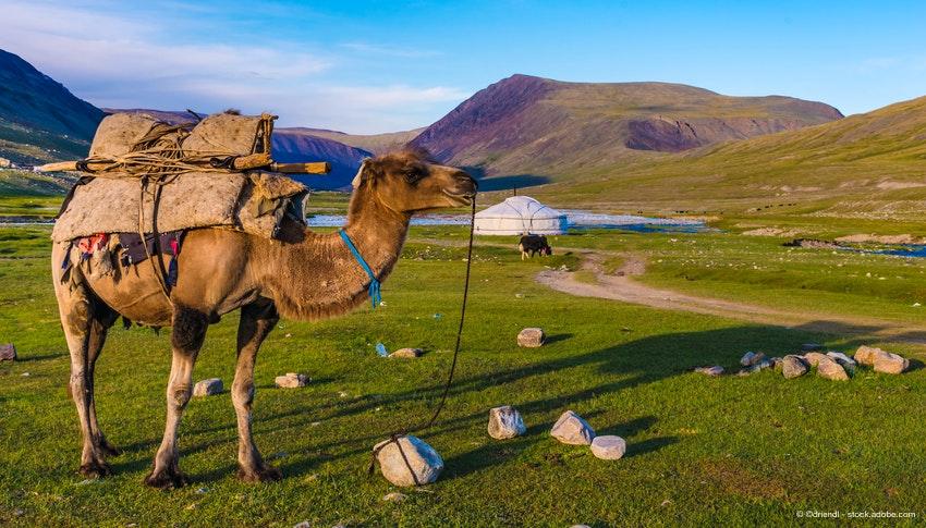 Rundreise Kamtschatka, Sibirien und Mongolei :: Saison 2019 ...