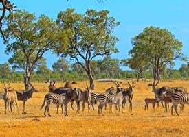 Reisebild: Rundreise Afrika - Namibia, Botswana und  Simbabwe
