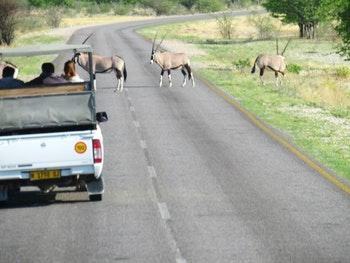 Safari im Etoscha Nationalpark - ©Eberhardt TRAVEL