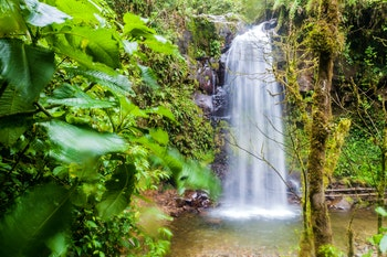 Nebelwald bei Boquete, Panama - ©©Matyas Rehak - stock.adobe.com