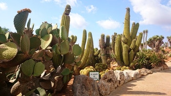 Botanicactus, Mallorca - ©Katrin Kerpa