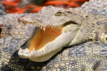 Krokodile - ©RBG  Annett Mueller