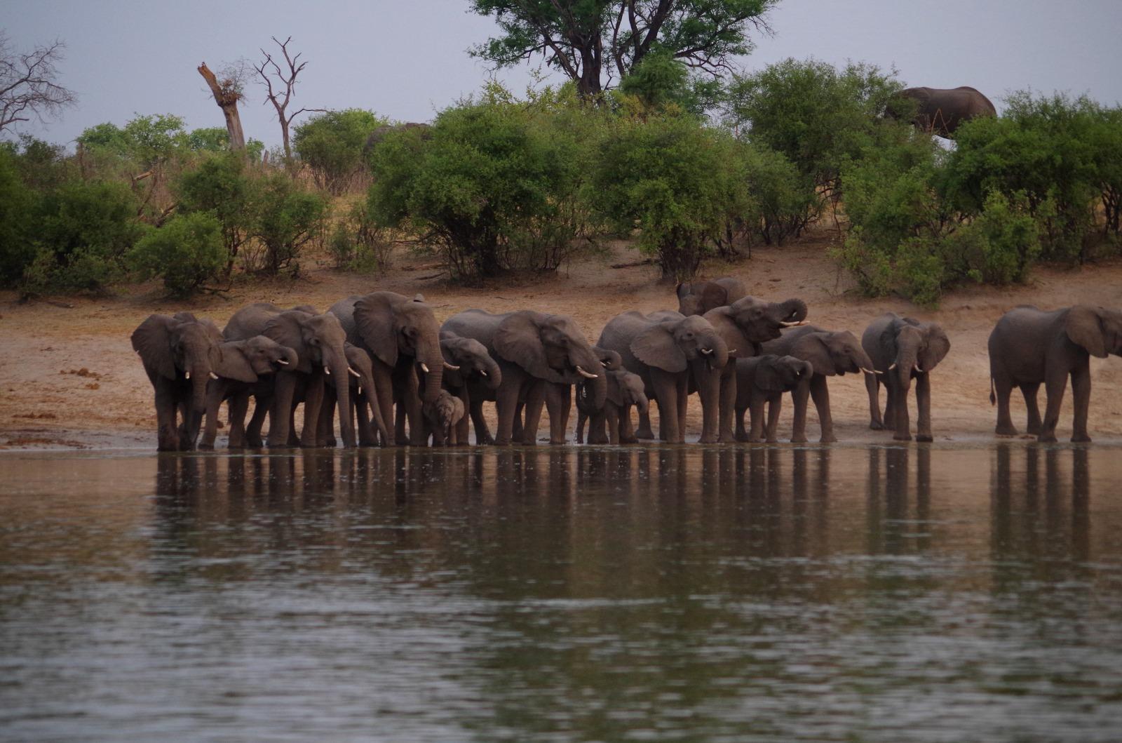 https://assets.eberhardt-travel.de/2019/Namibia/67358_Bootsfahrt_auf_dem_Okawango_-_Elefantentreffen_Original.jpg