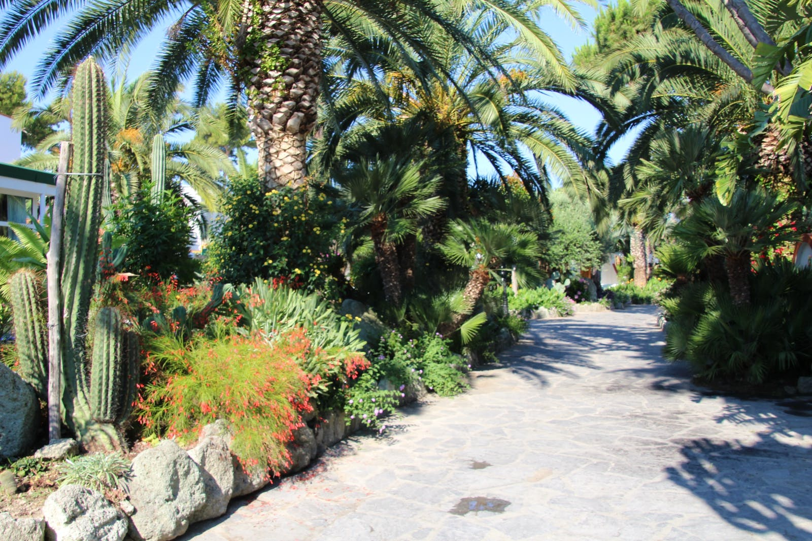 Hotel Mediterraneo Ischia Forio