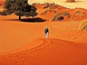auf den Duenen des Sossusvlei in Namibia