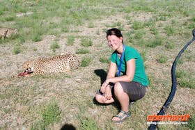 Hautnah mit Geparden in Namibia
