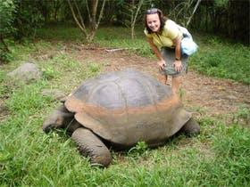 Riesige Landschildkröten auf den Galapagos-Inseln