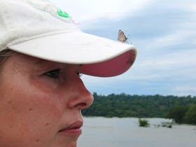 Mein neues Haustier aus Brasilien: Der 88er Schmetterling ...